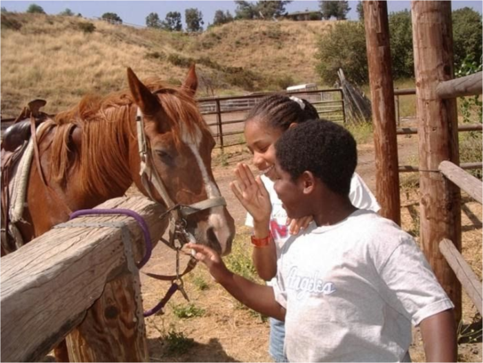 Two students greet horses.