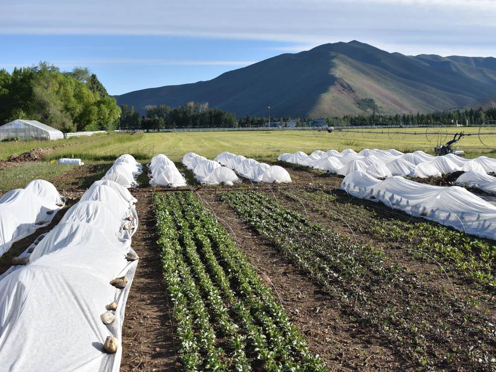 Impact Idaho Fund recipient Lookout Farm