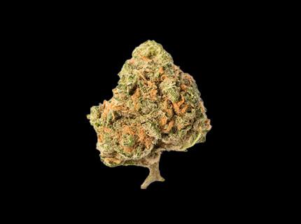 Blue Nova dry cannabis bud