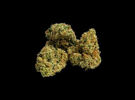 MK Ultra dry cannabis bud