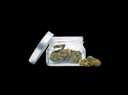 Purple God glass container filled with dry cannabis buds