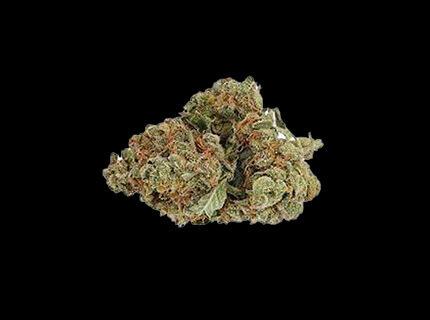 Pine Kush dry cannabis bud