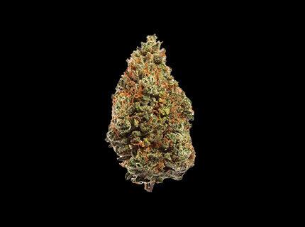 Elation dry cannabis bud