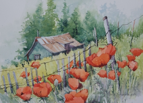 Fenced Poppies