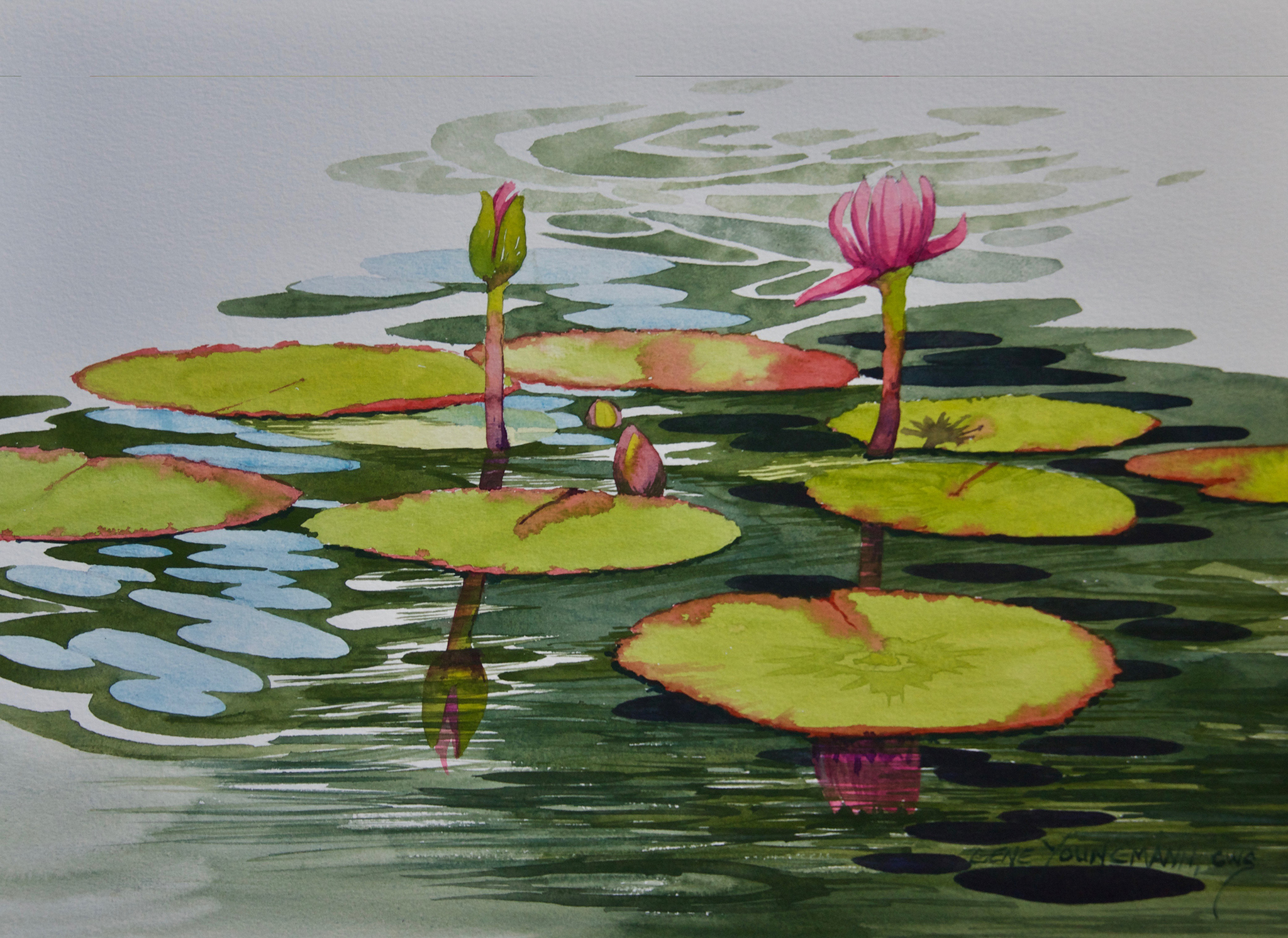 Between the Lily Pads