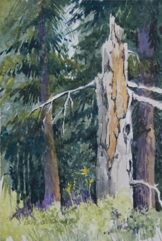 Old Pine Sentry