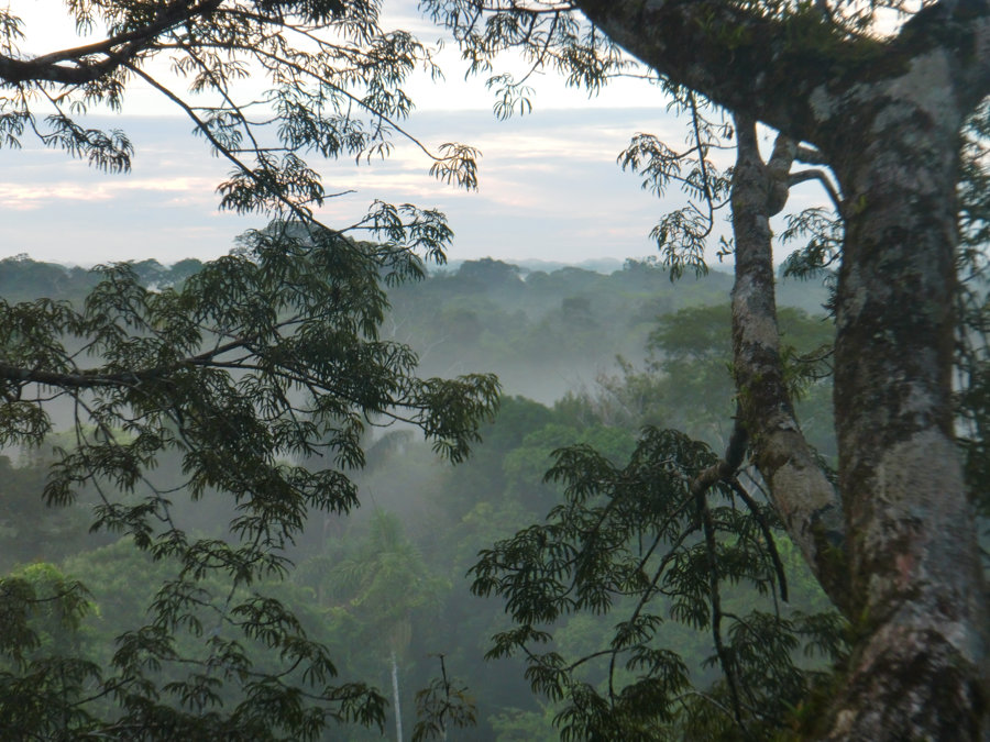 Foggy morning in the rainforest