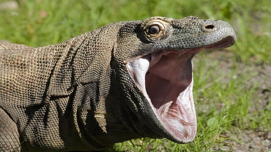 KomodoHype that is the new PogChamp
