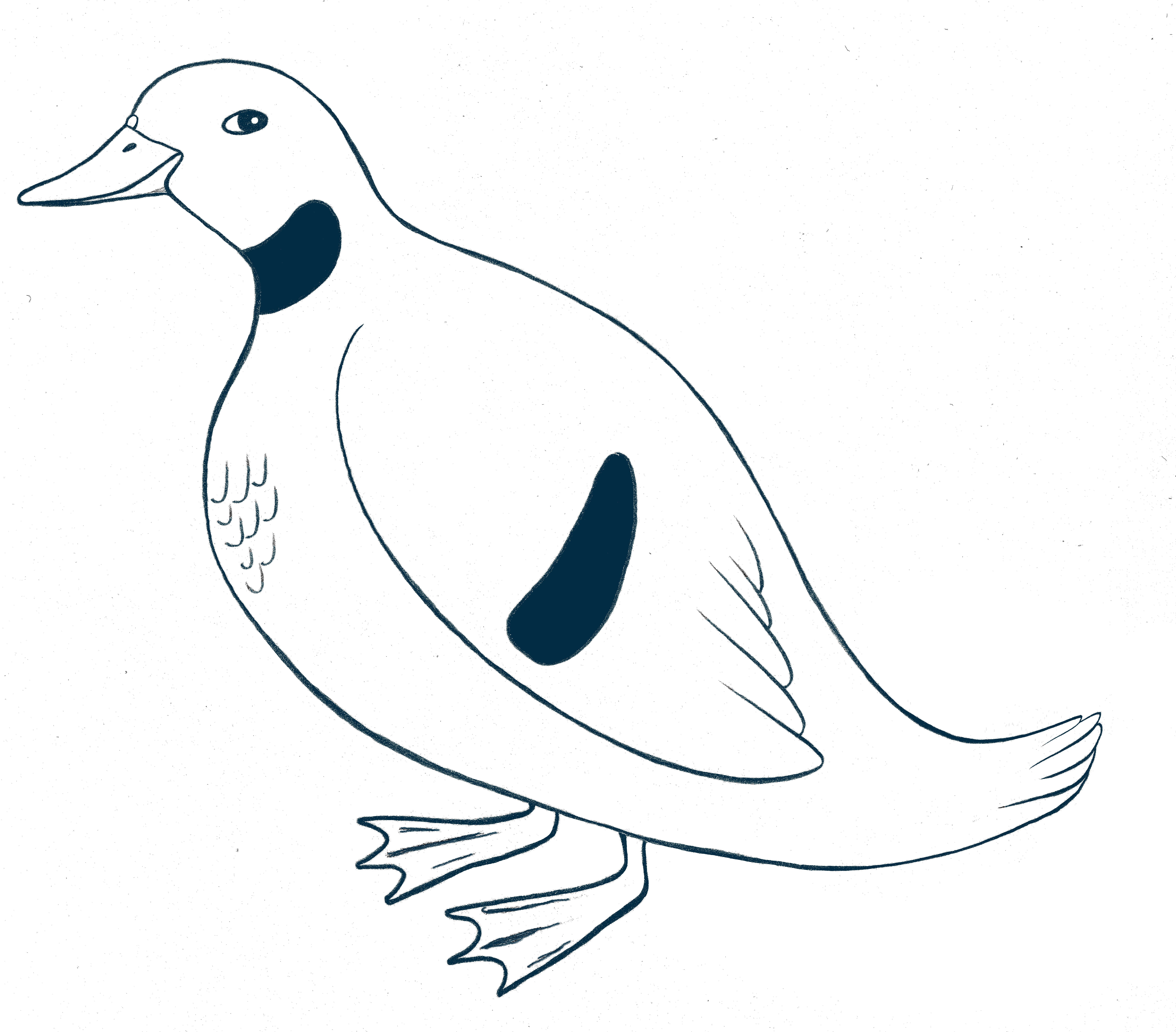 Drawing of duck i blue