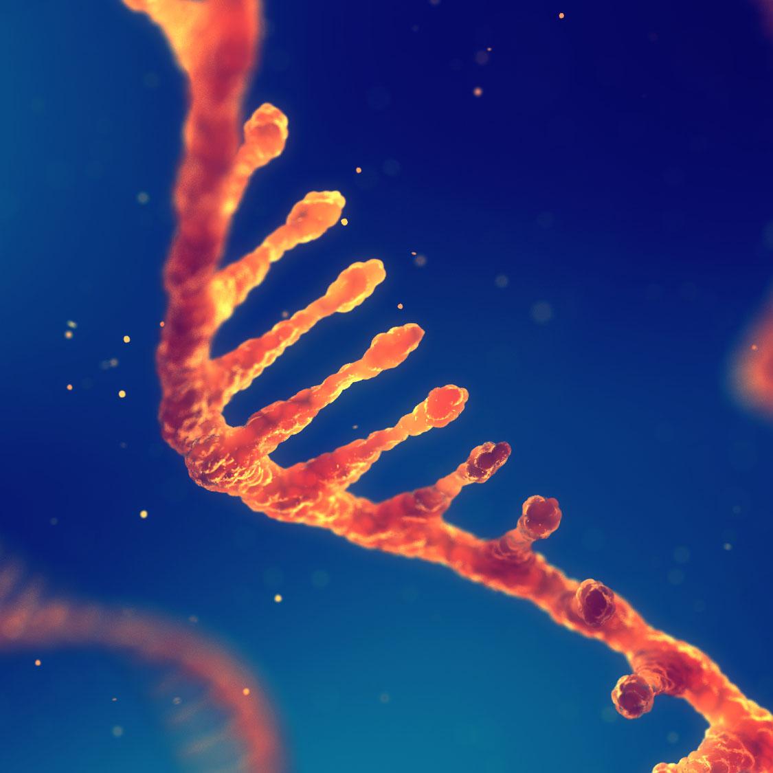 Image of. RNA