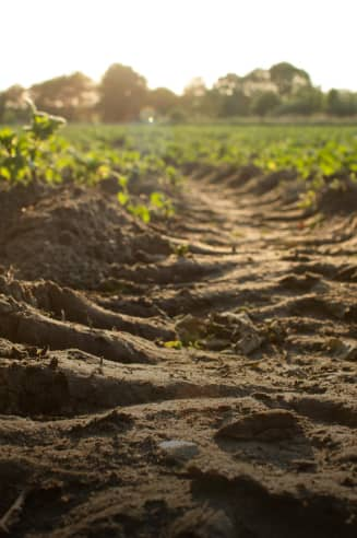 Soil close-up in field