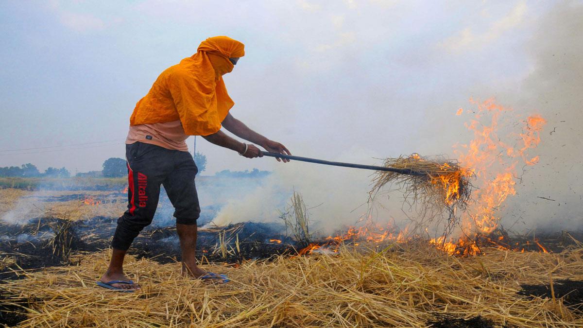 Farmer burns stubble in a field.