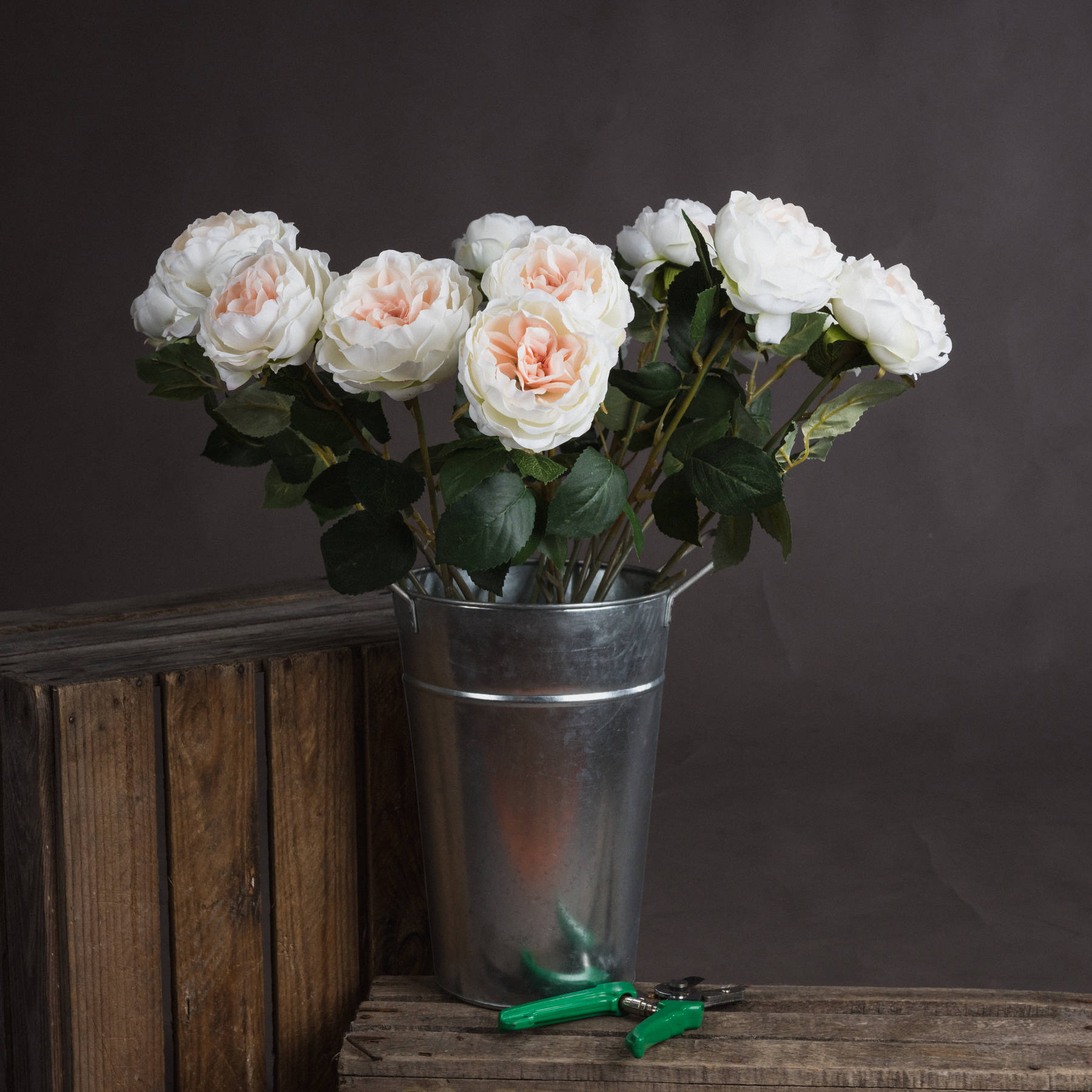 Blush Garden Rose