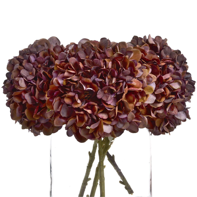 Autumn Coffee Hydrangea