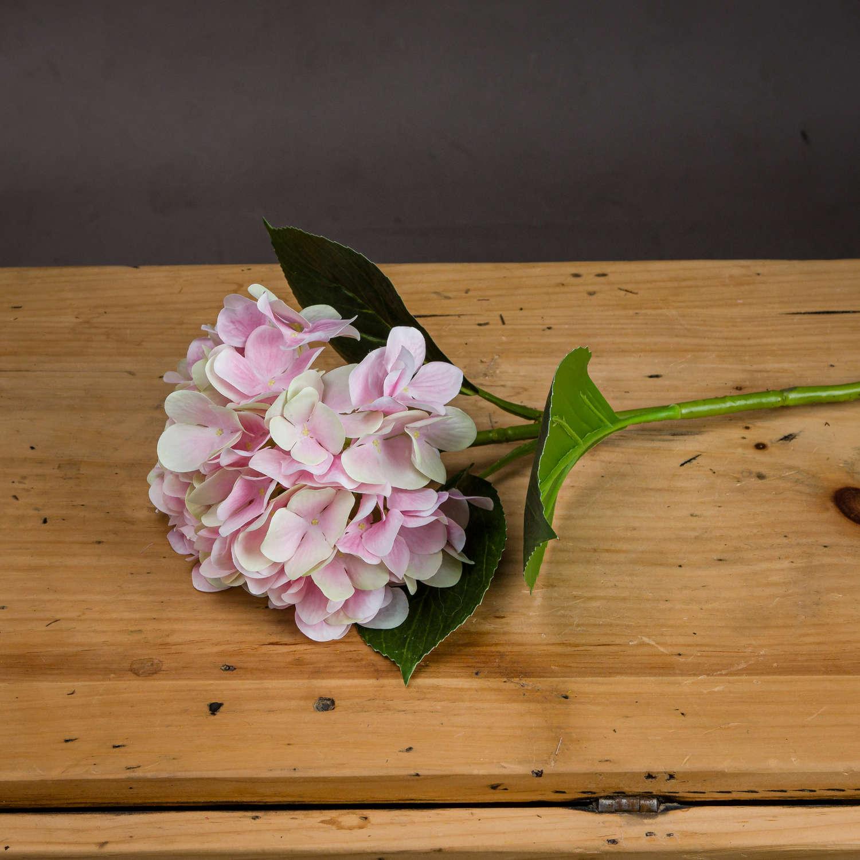 Pale Pink Classic Hydrangea