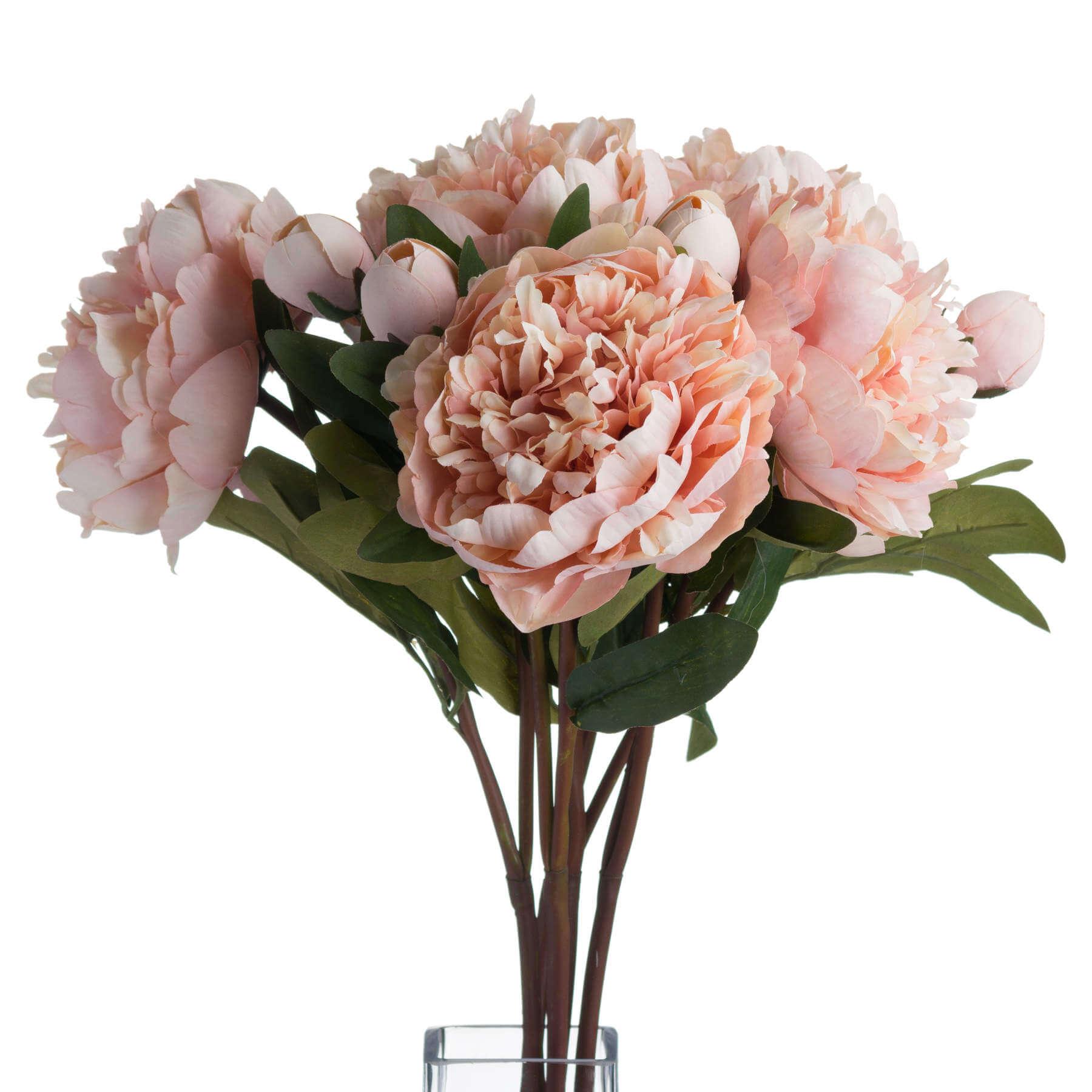 Peach Peony Rose