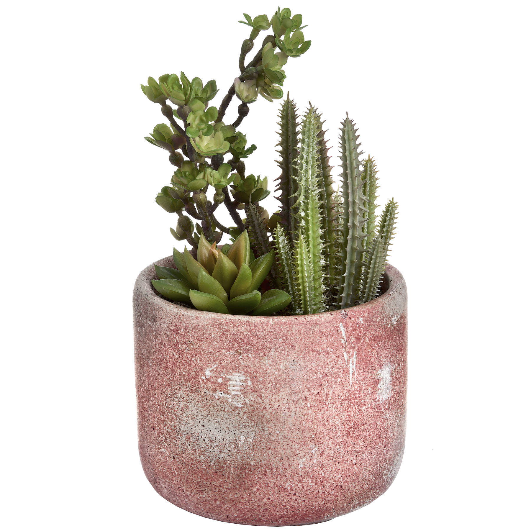 Potted Cacti and Succulent