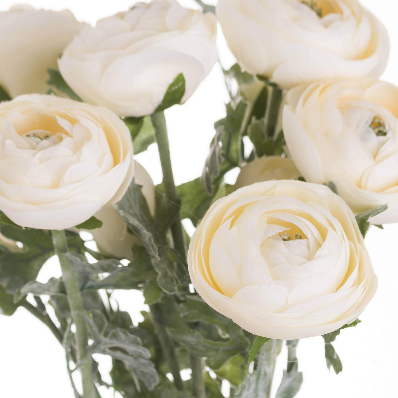 Soft Cream Ranunculus