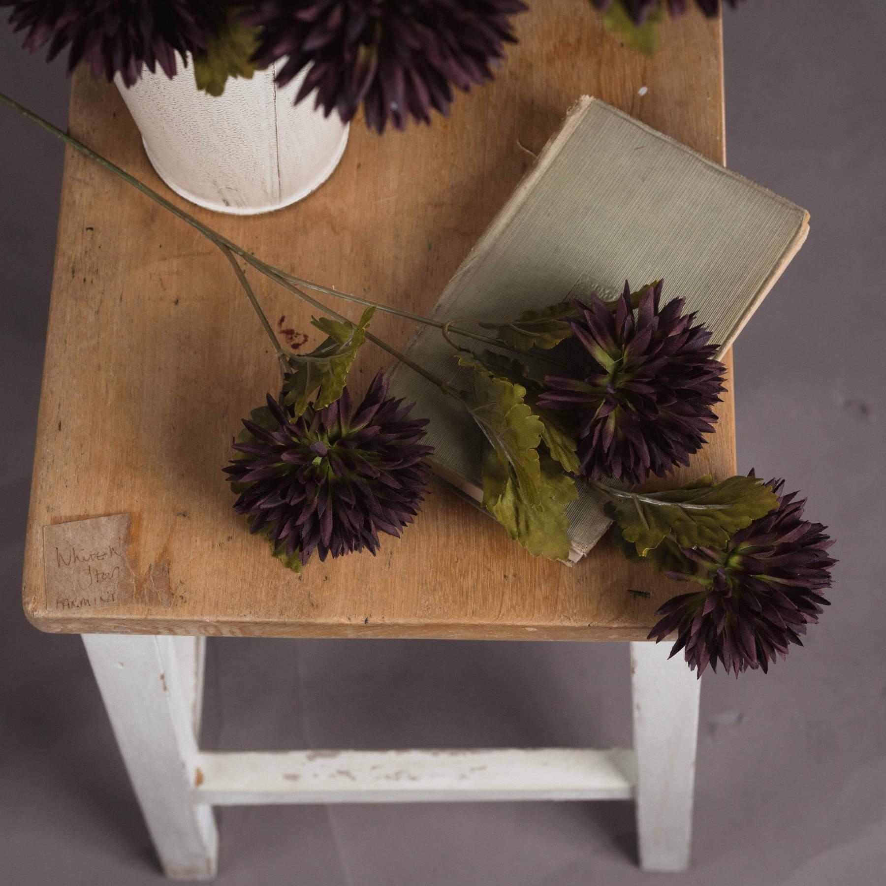 Chocolate Chrysanthamum