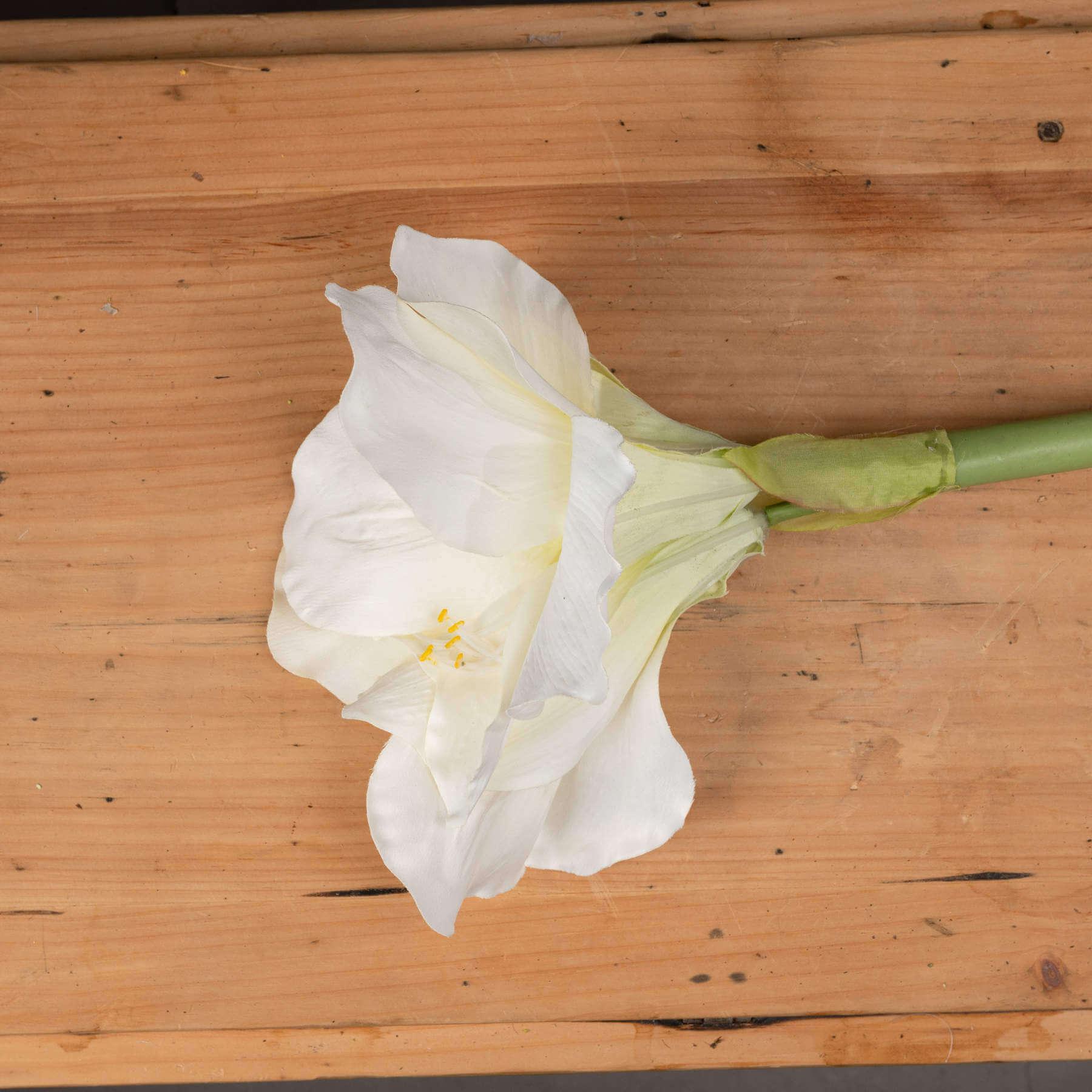 Classic White Amaryllis Flower