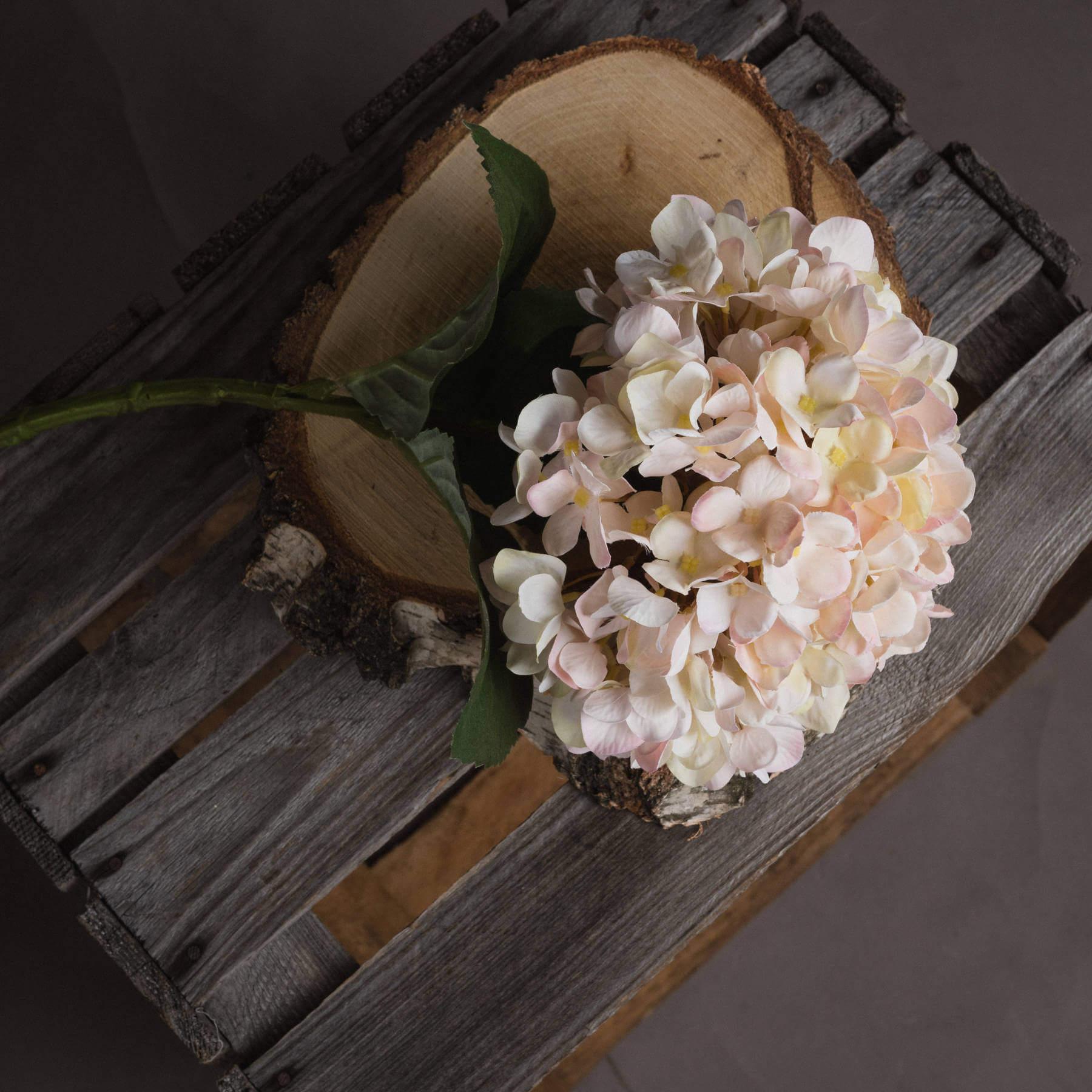 Autumn White Hydrangea
