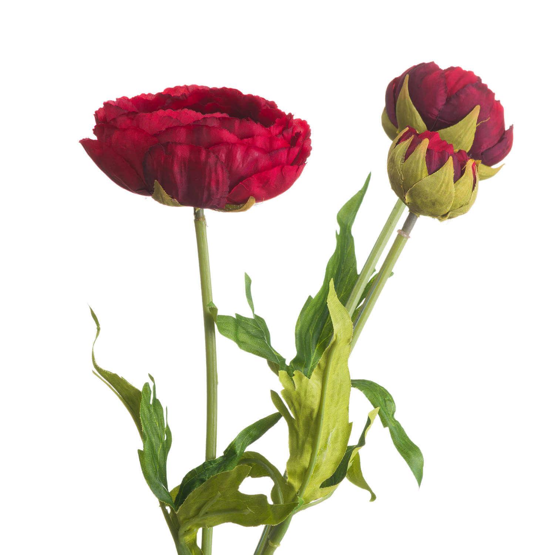 Romance Red Peony
