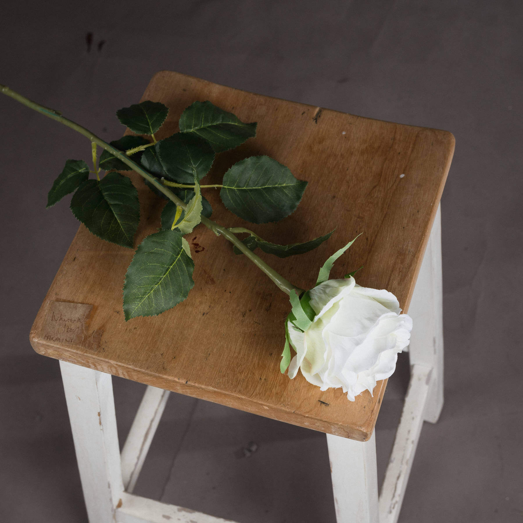 Traditional White Rose