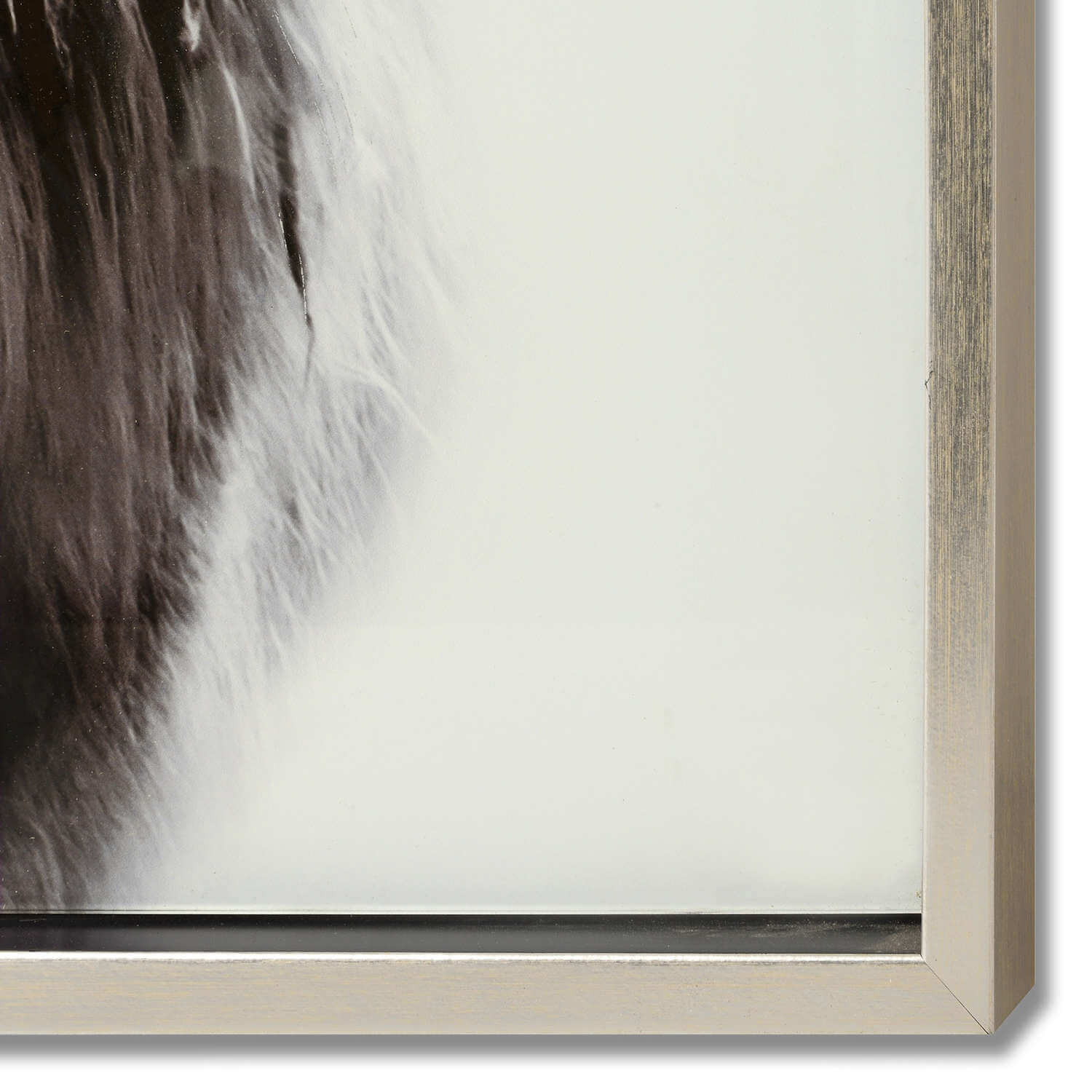 Highland Cow Right Facing Glass Image with Silver Frame