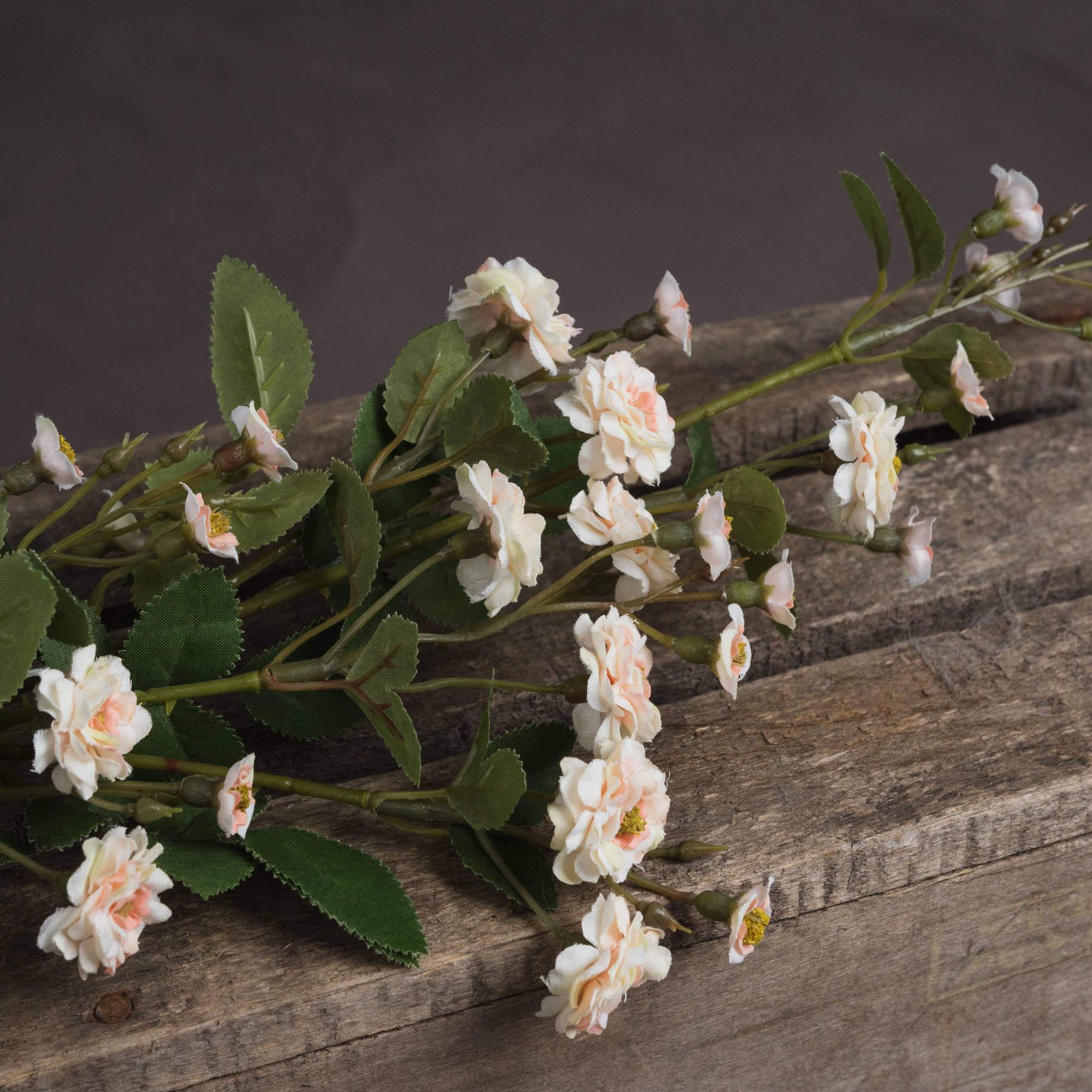 Cream Wild Meadow Rose