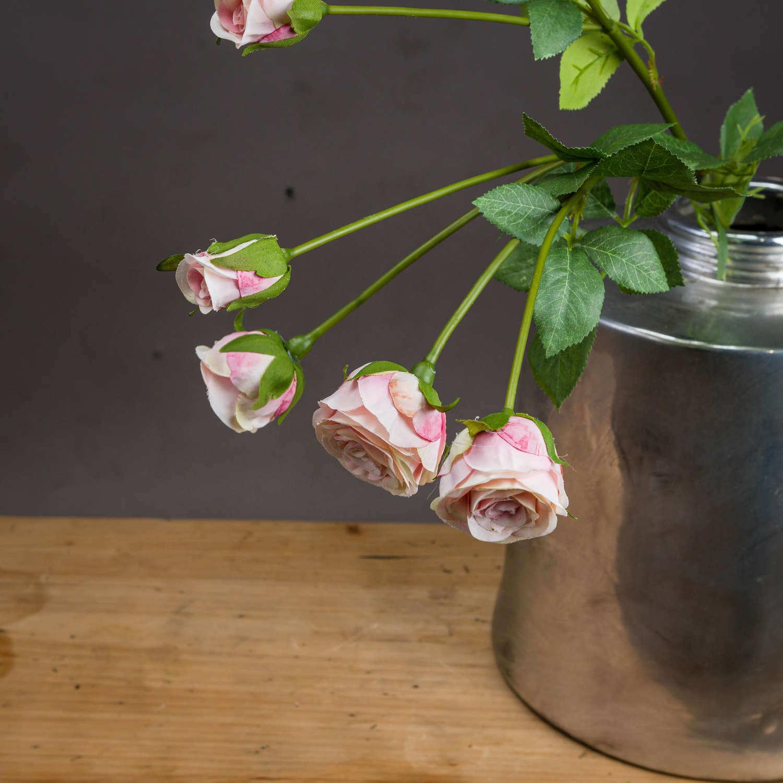 Medium Pale Pink Spray Rose