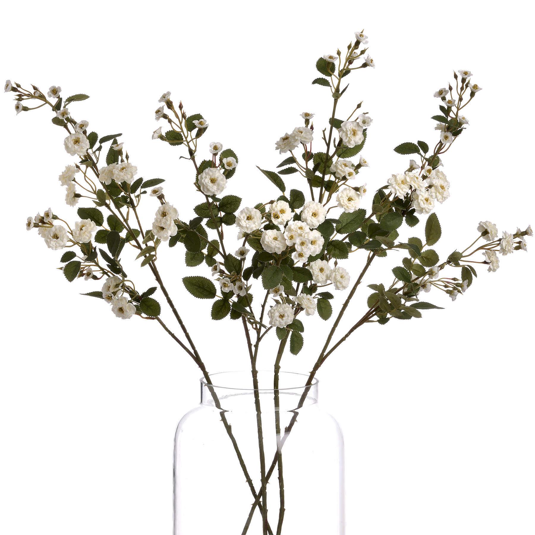 White Wild Meadow Rose