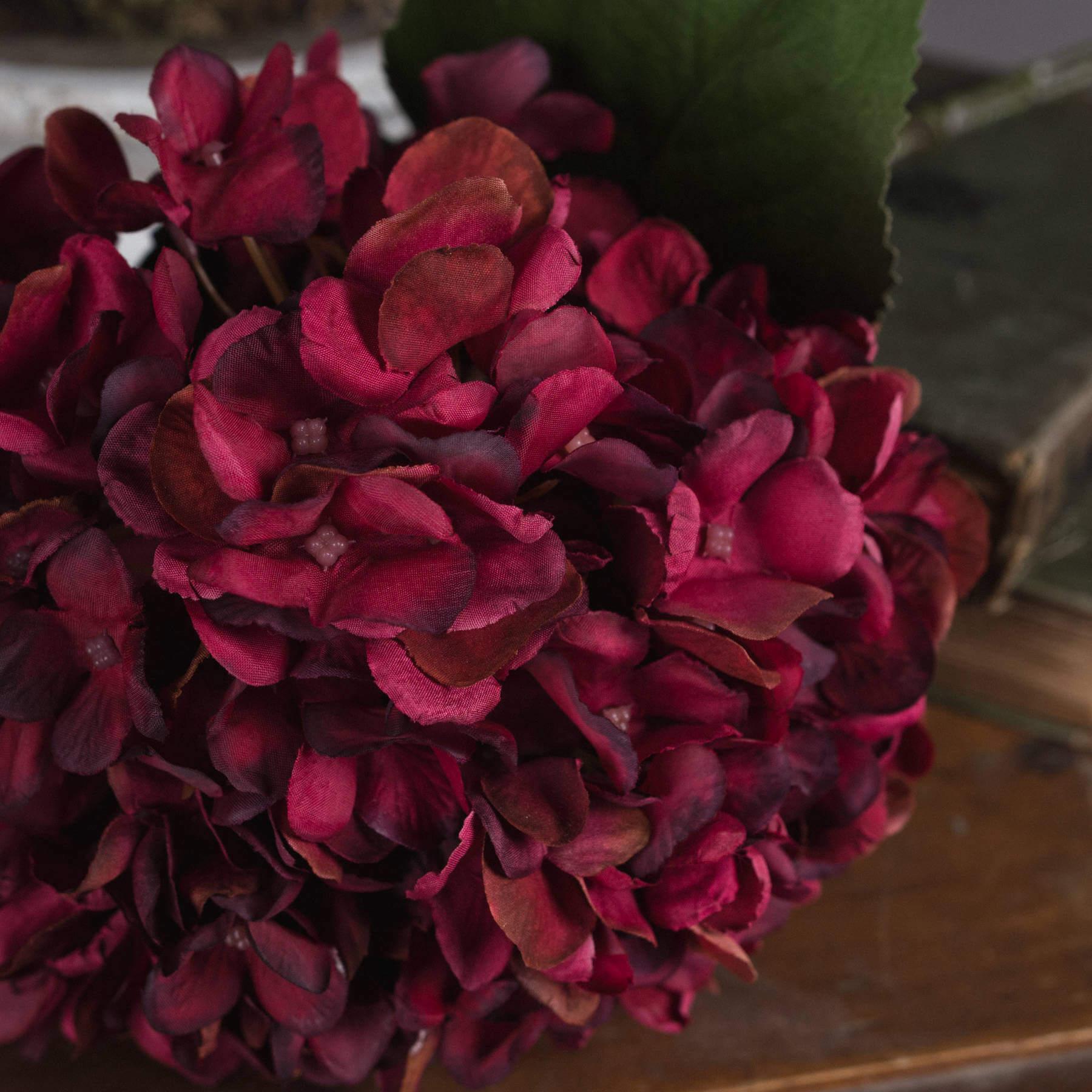 Autumn Ruby Hydrangea