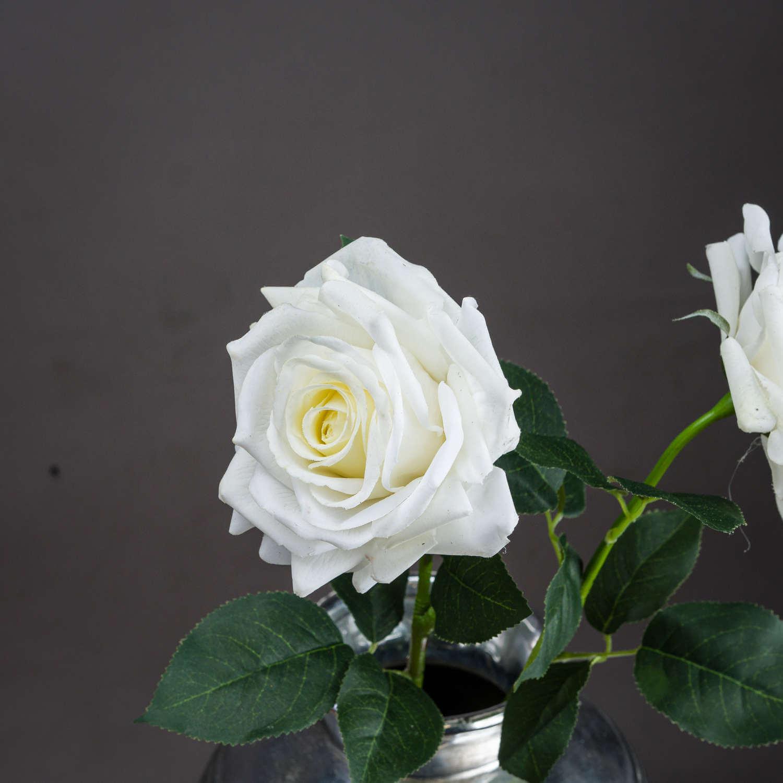 Large White Garden Rose