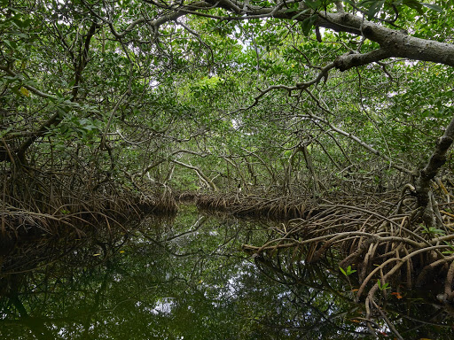 Mangrove forest in Mexico.