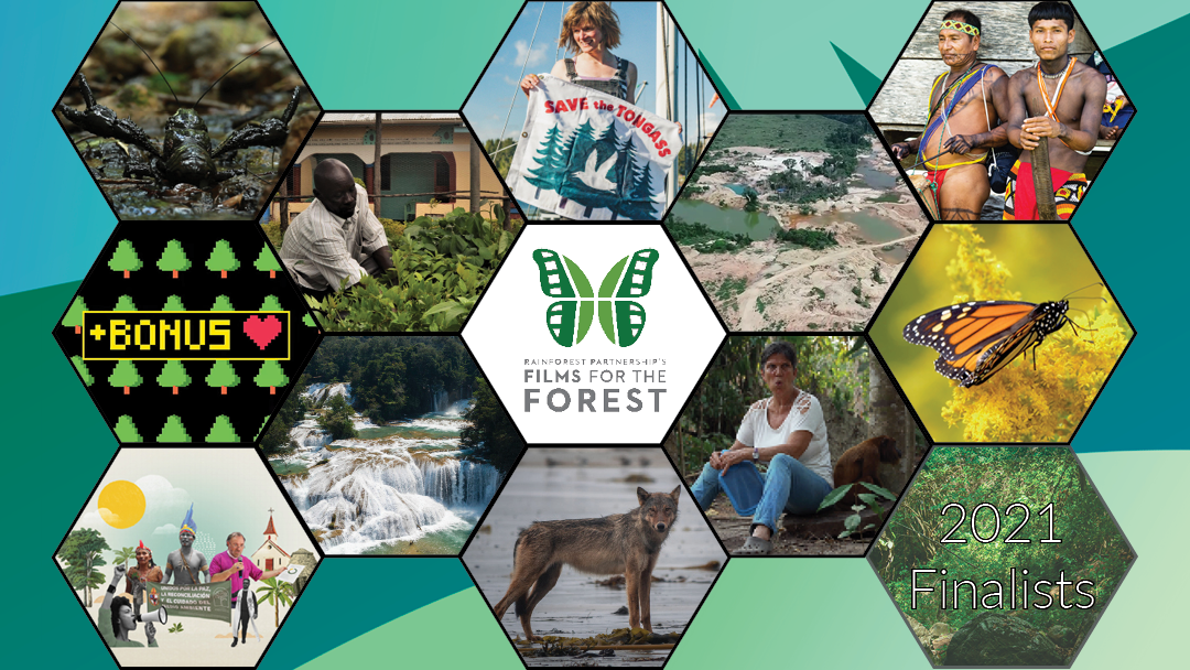 Introducing Films for the Forest 2021's 11 Finalists
