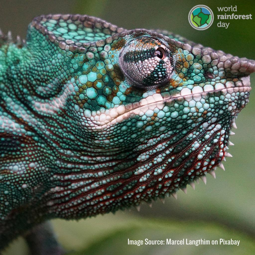 World Rainforest Day Reptile flyer