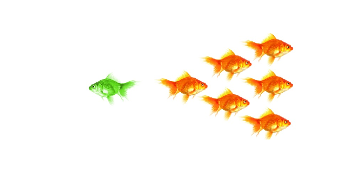 A green goldfish swimming to the left whilst 6 orange goldfish swim to the right
