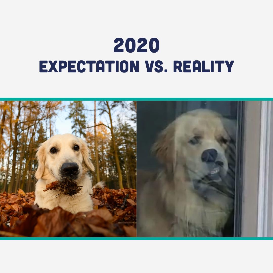 2020 expectations vs reality funny memedog