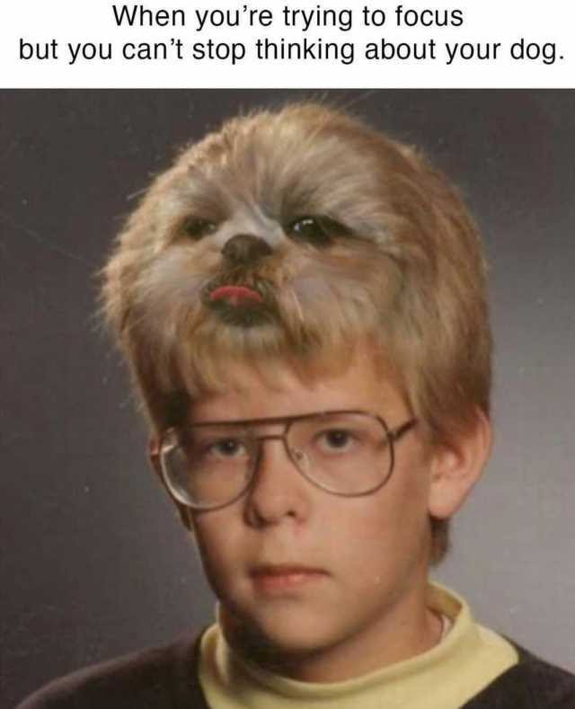 When youre trying to focus but you cant stop thinking about your dog