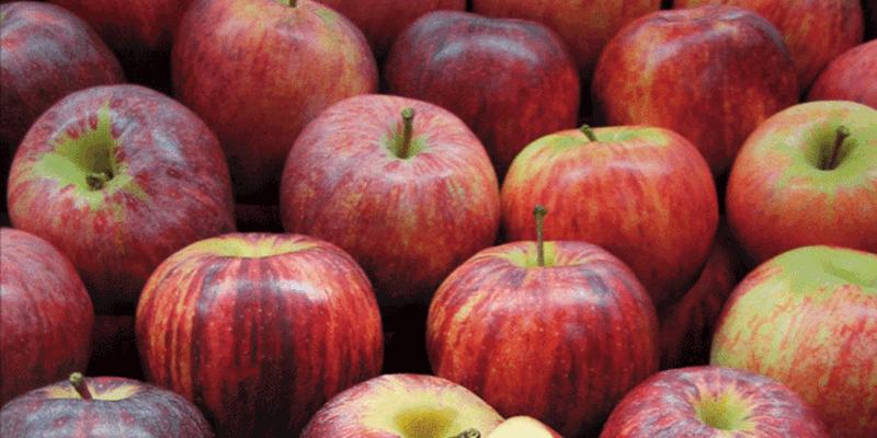 Royal Gala apples (NZ) - 1kg