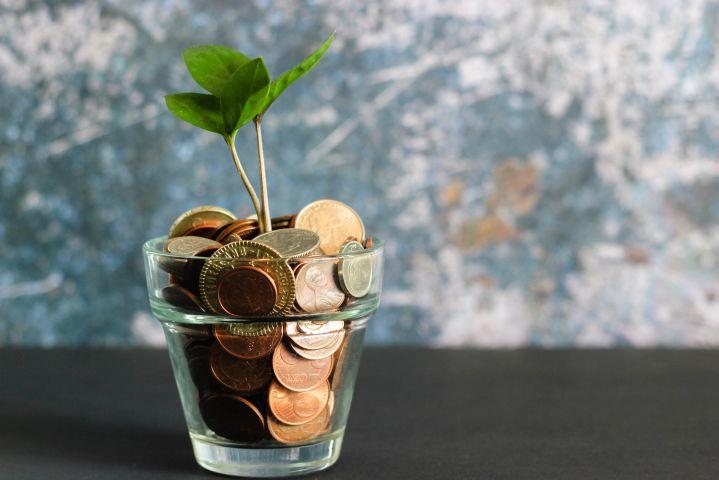 Eine Pflanze wächst aus einem Glasbehälter gefüllt mit Münzen