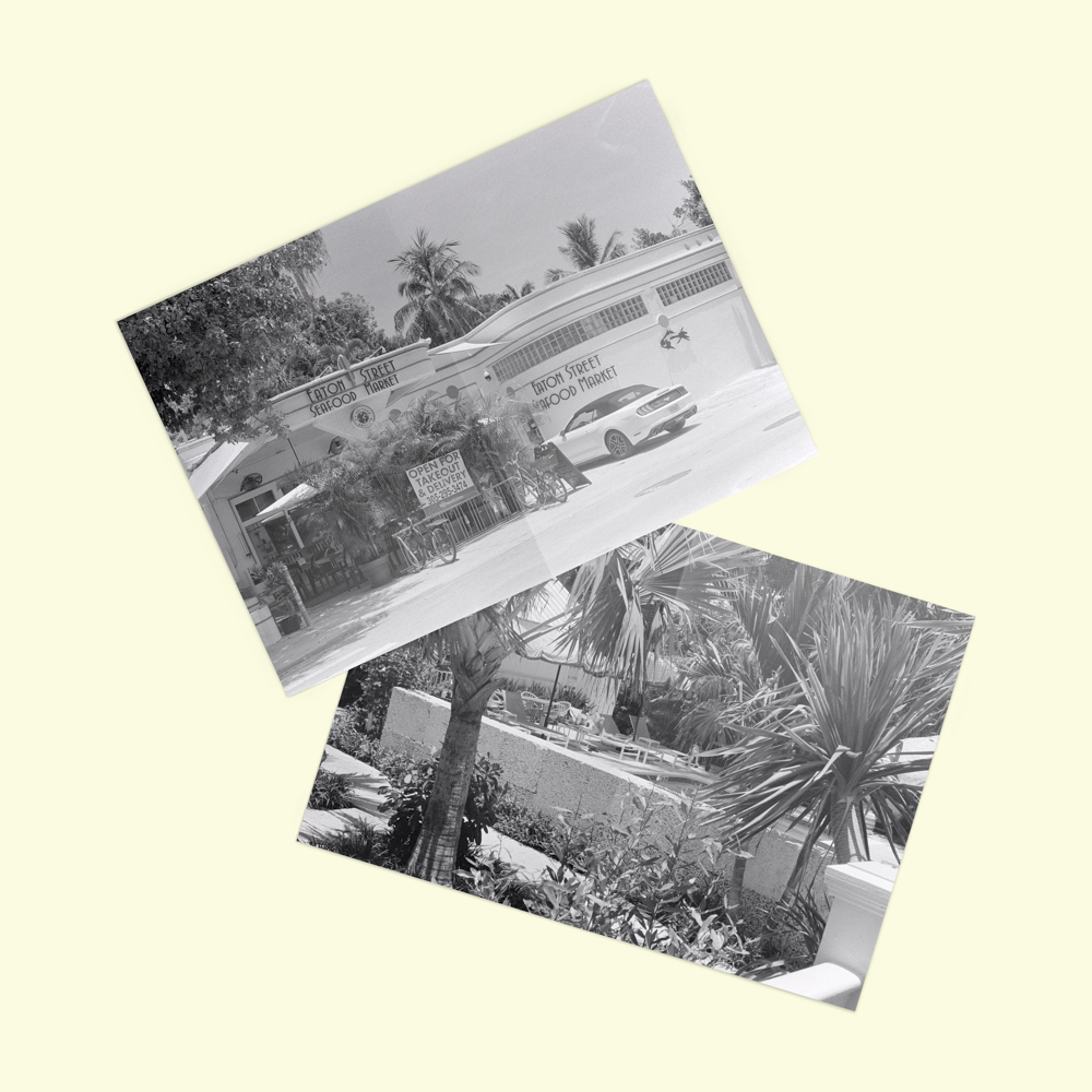 Large photos of a seafood restaurant and palm trees.