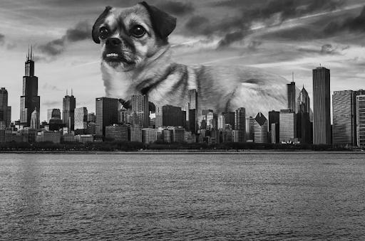 A dog superimposed over Chicago skyline
