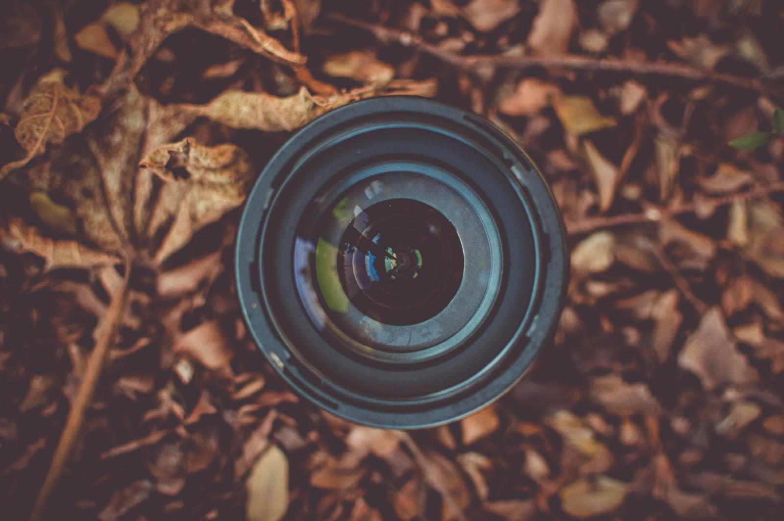 Camera Lens in Autumn Leaves