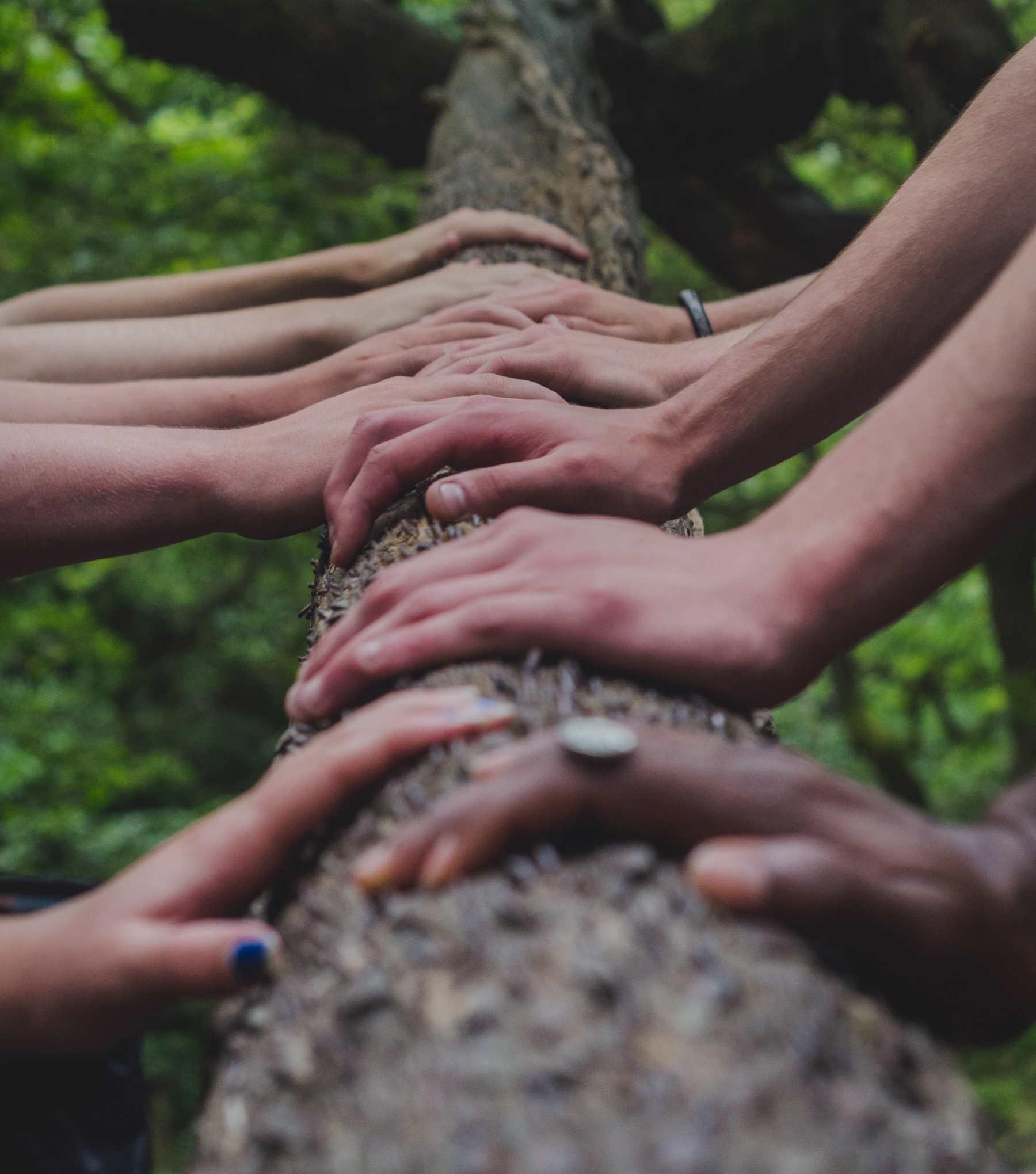 Hands together on a log.