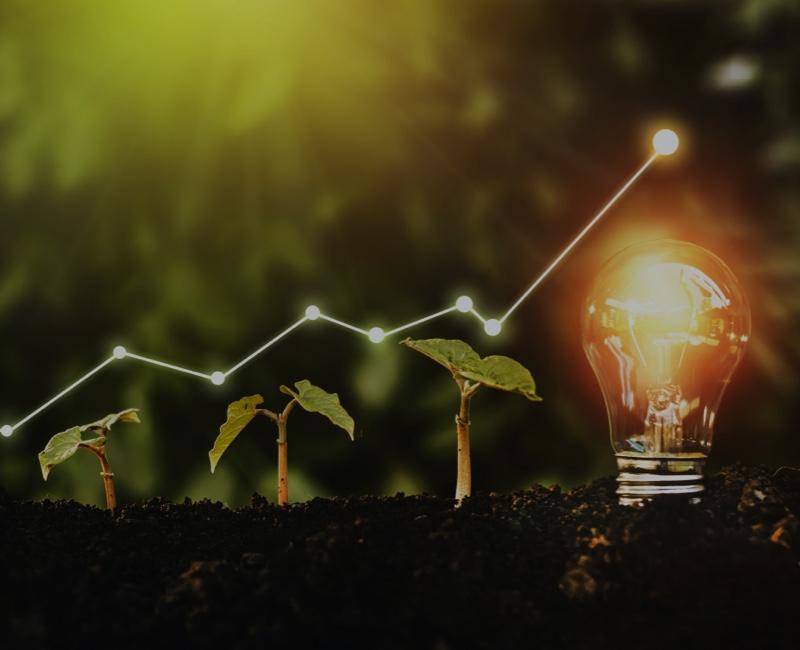 Venture Capital Investment - die Pflanze wächst zu einer Idee
