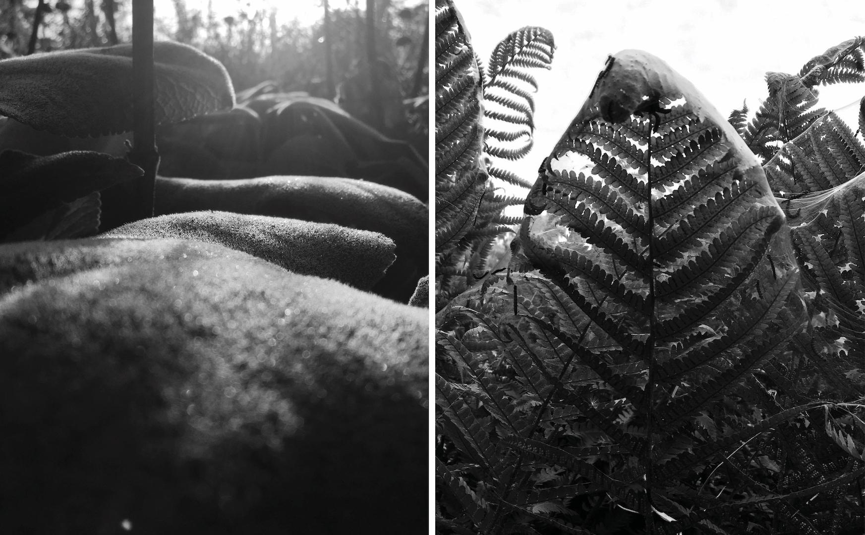 Billeder viser planter i Ørestaden