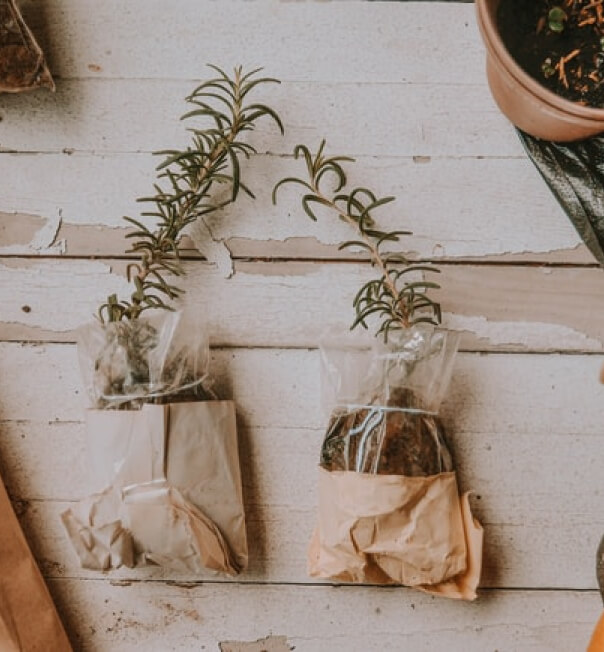 Plants in bags with soil