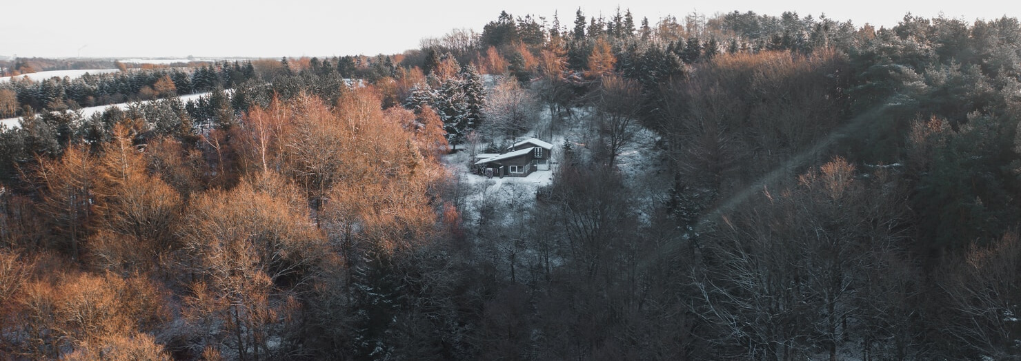 House inside a forest