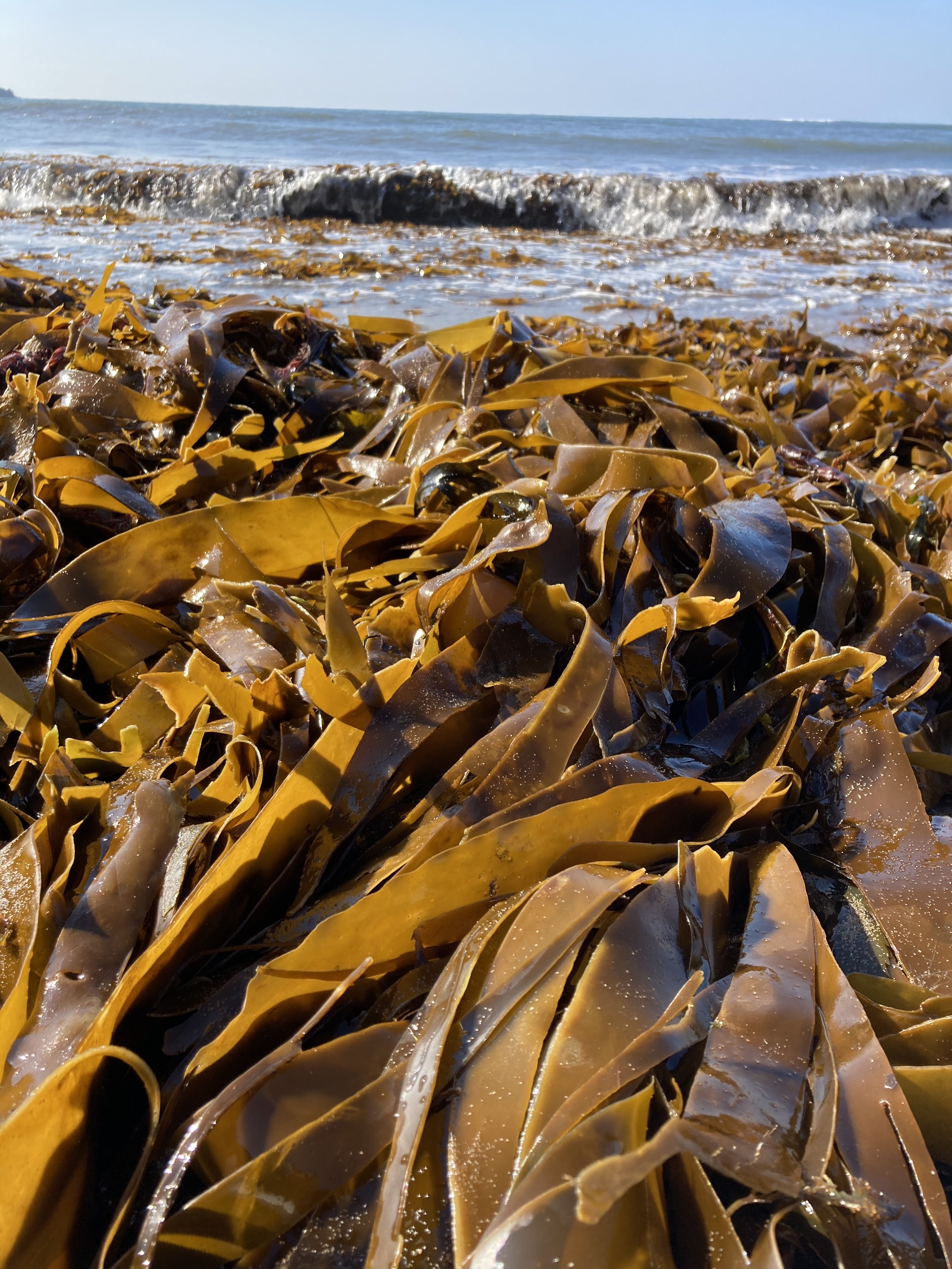 Dried Kombu Seaweed